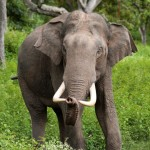 Angry Elephants Killed a Man in India