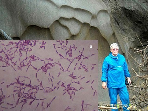 russian scientist experimented on ancient bacteria for long life