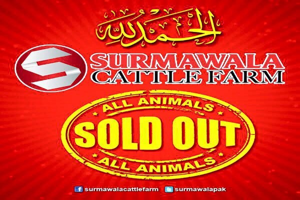 Surmawala cattle farm 2016 Eid-Ul-Azha animal's Photos